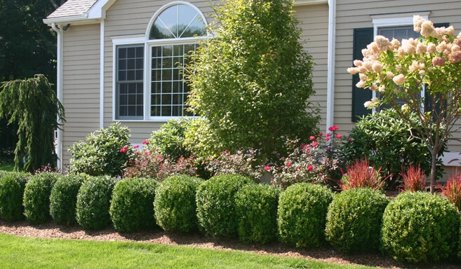 Lawn care service landscape maintenance ocala fl for Professional landscaping ideas